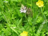 Part of the meadow we used for practical sessions